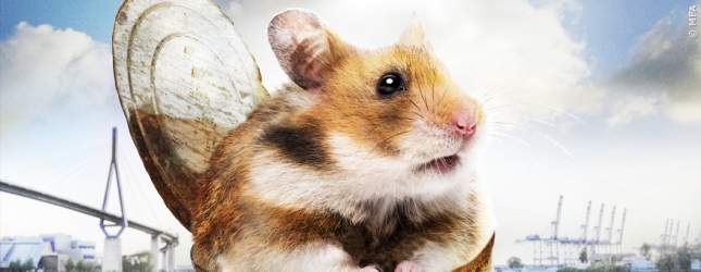 Hamster Raffi treibt in einer Dose im Wasser.