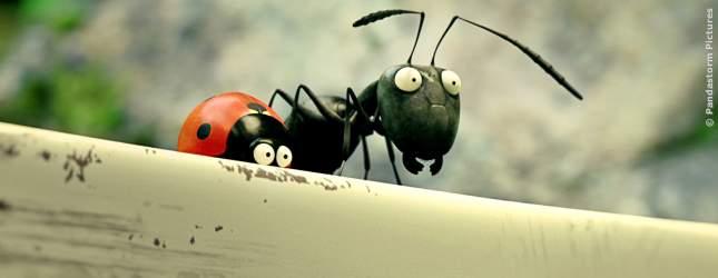 Die schwarze Ameise und der Marienkäfer werden schnell Freunde.