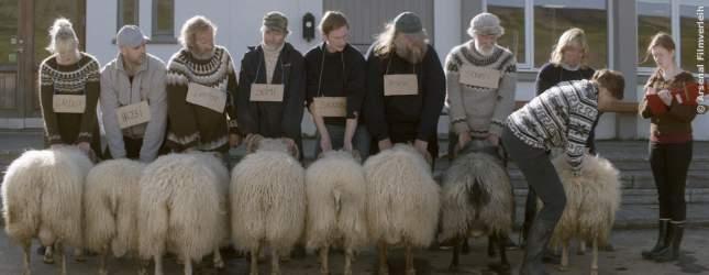 Der Wettbewerb ums beste Schaf. Ein Jahres-Highlight unter den Schäfern.