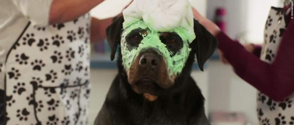 Rottweiler Max ermittelt in Show Dogs: Exklusiver Clip