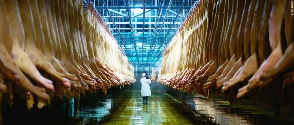 Eating Animals: Dokumentation als Free-TV-Premiere