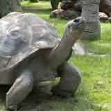 So alt werden Galápagos-Schildkröten