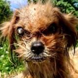 Dieser Hund schockiert den Tierarzt