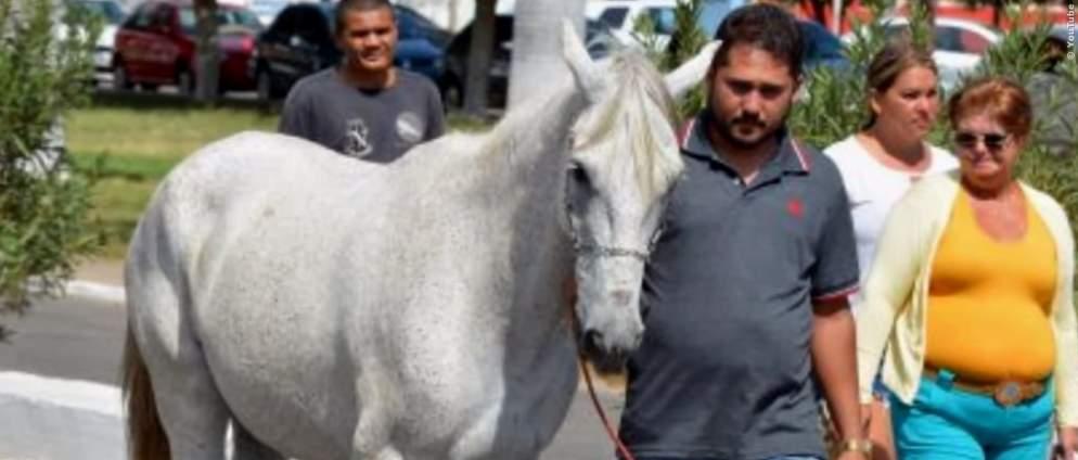 Pferd bricht in Tränen aus