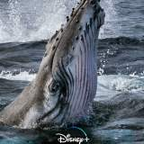Die geheimnisvolle Welt der Wale - Serie 2021
