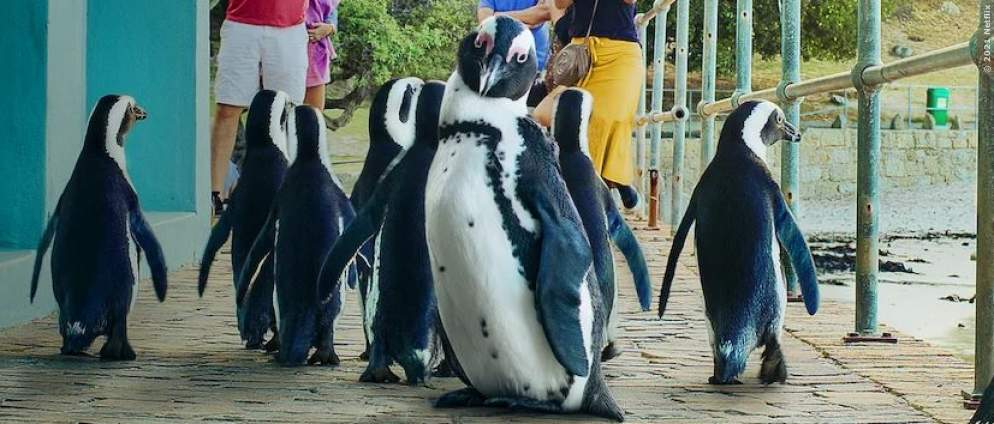 Stadt der Pinguine