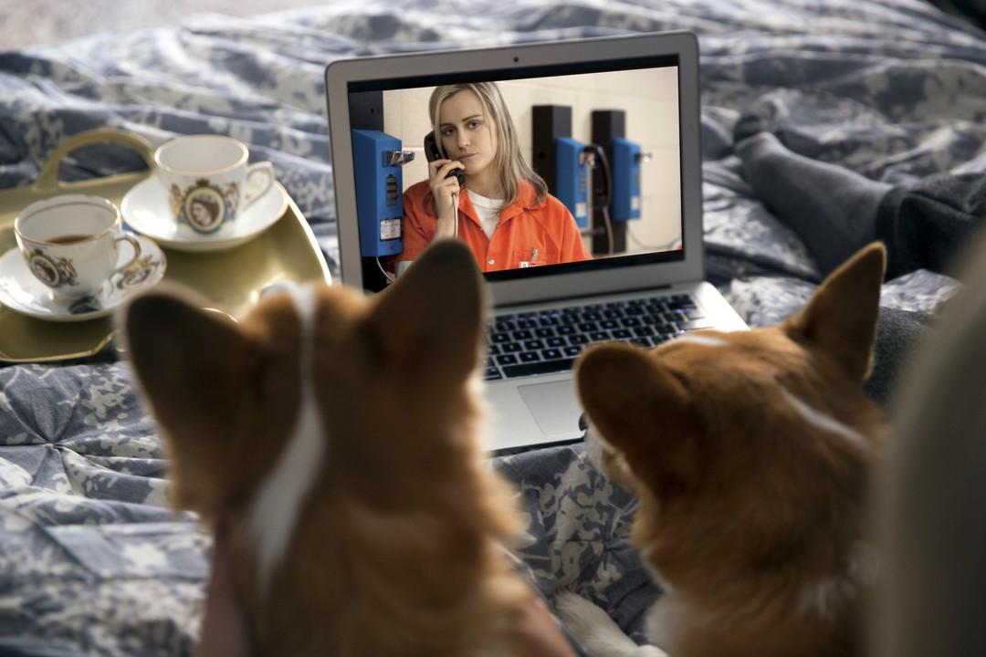 Haustiere sind gute Netflix-Partner - Bild 3 von 7