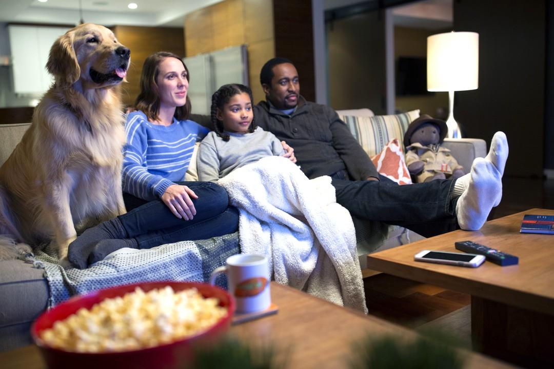 Haustiere sind gute Netflix-Partner - Bild 4 von 7